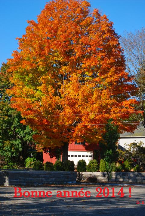 Un bouquet de chaleur du Connecticut dans un décor d'automne  (photo Dahmane Soudani)