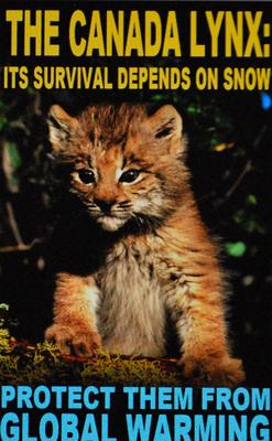 Le lynx du Canada dans la même galère (photo écran illustration EDF-DR)