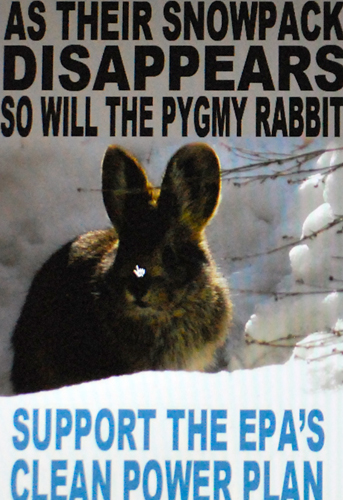 La lapin nain victime de la pollution au carbone (photo écran illustration EDF-DR)